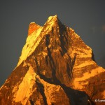 Golden peak - Fish Tail - Beauty of Himalaya in the light of the setting Sun